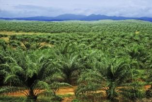 Sofiprotéol veut investir dans l'huile de palme en Côte d'Ivoire