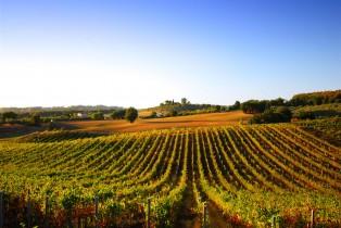 Les investisseurs étrangers ne se bousculent plus pour le vignoble français